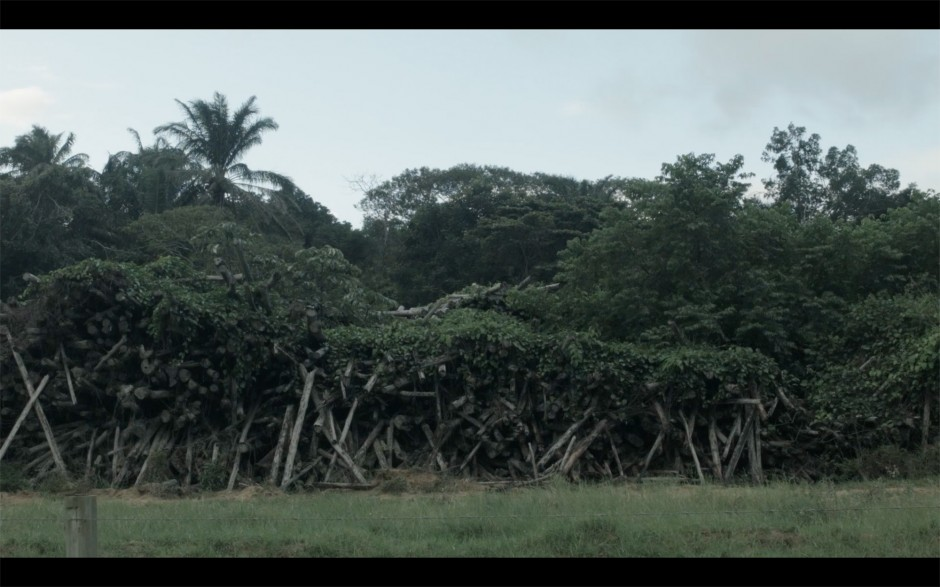 HELVÉCIA – BRAZIL, the film